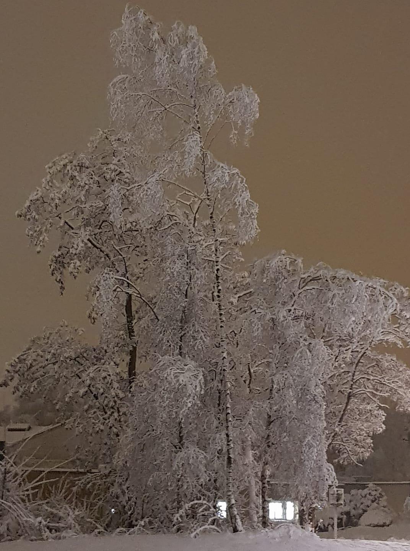 neige diapo lillers (7)