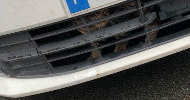 Un chat fait Burbure – Lillers – Béthune – Armentières coincé dans la calandre d'une voiture