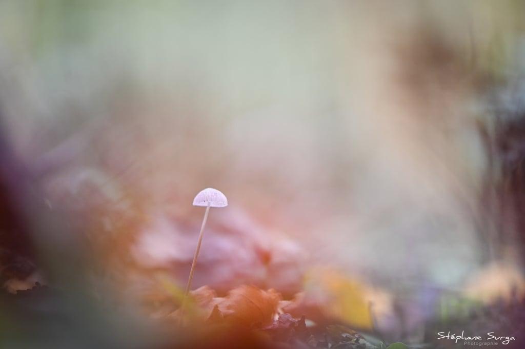 photo champignon Stephane Surga Lillers - Burbure (3)
